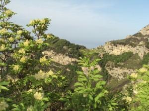 panorama sentiero orrido di pino